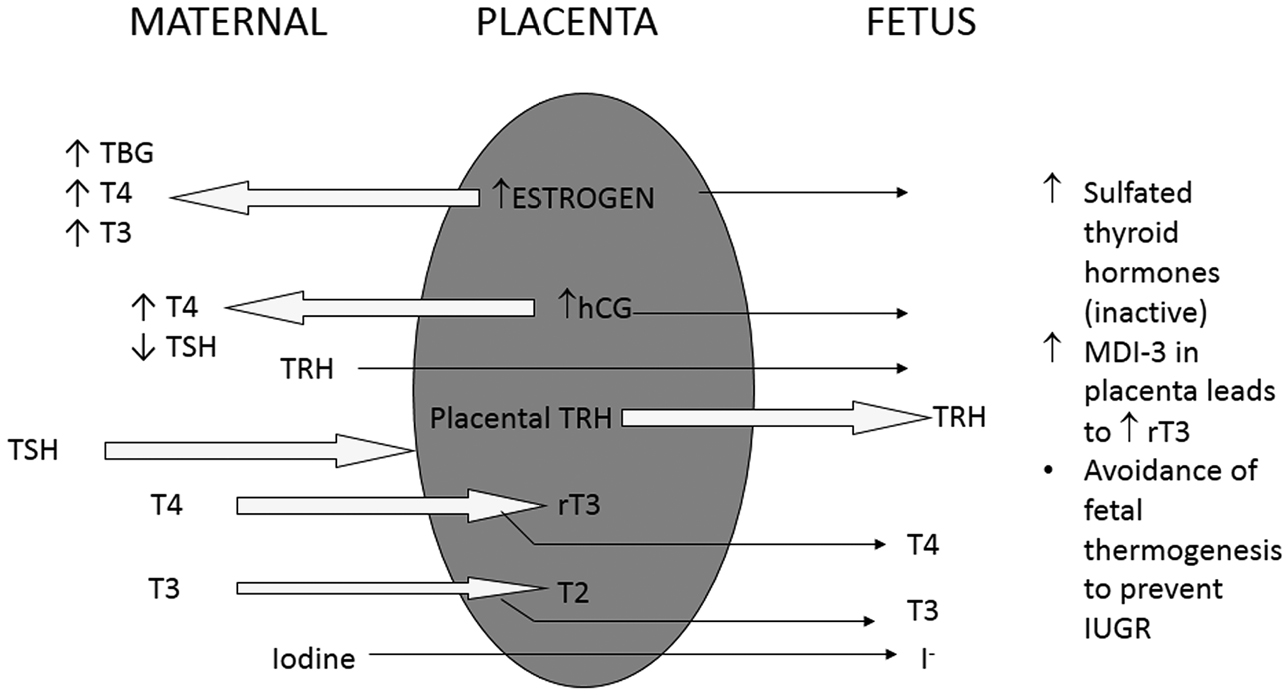 Transient hypothyroidism in the newborn: to treat or not to